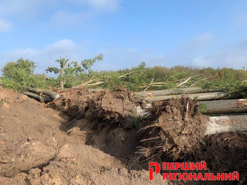 На Херсонщині нещадно викорчовують дерева