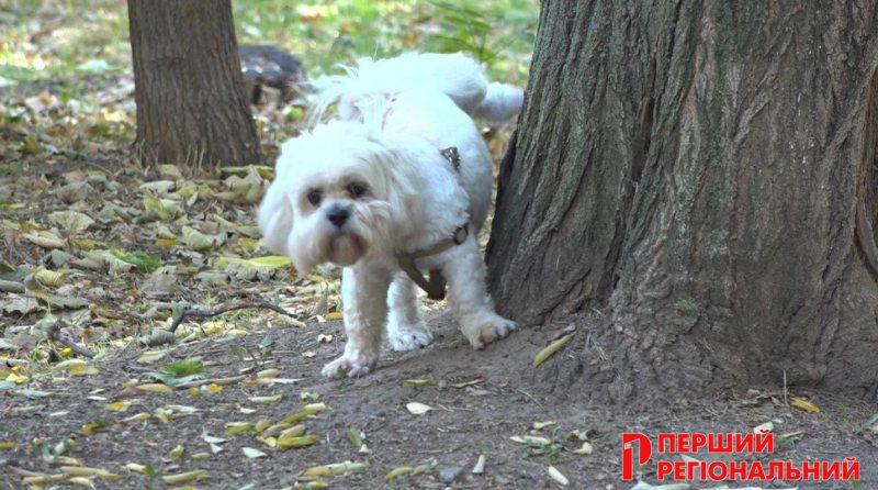 Херсонці все частіше скаржаться на порушення правил вигулу собак