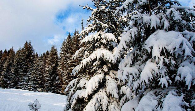 Карпати засипало снігом: висота покриву подекуди сягає 25-ти сантиметрів