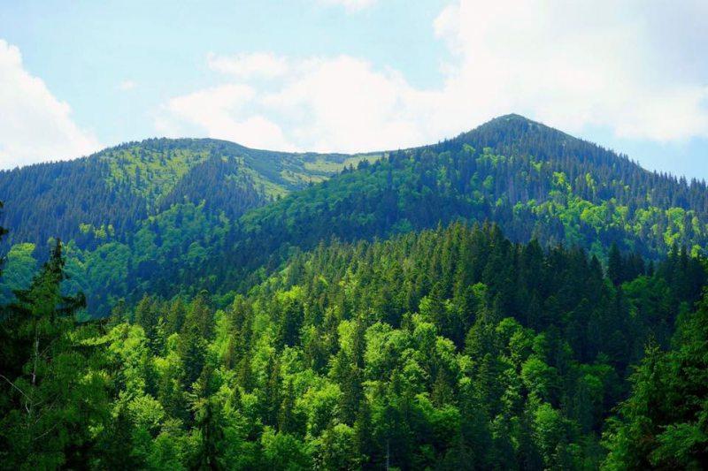 Гончарук анонсував аудит підприємств, які займаються вирубкою лісу