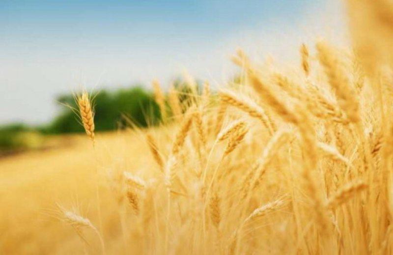 Херсонців запрошують відвідати агропромислову виставку