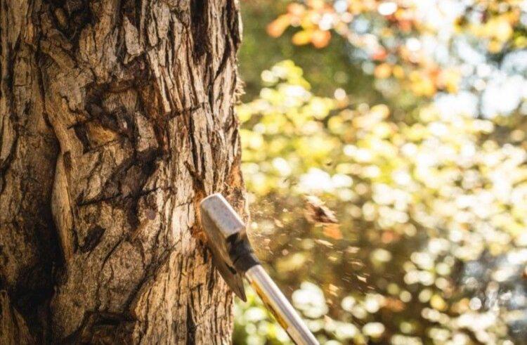 За незаконну вирубку лісу перед судом постане мешканець Горностаївського району