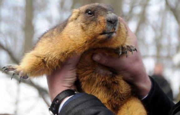 Харківський бабак прогнозує ранню весну