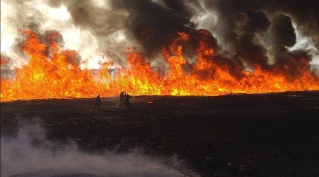 В Олешівському районі затримали підпалювача плавнів