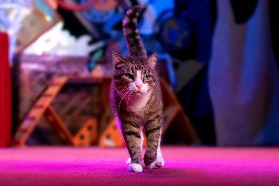 У театрі Куліша сцену під дахом відкрив кіт