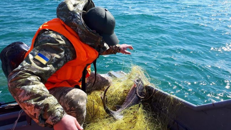 Прикордонники випустили цінний вид риби, яку піймали браконьєри сіткою