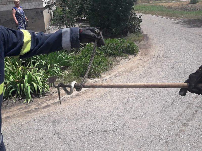 На Херсонщині рятувальники допомогли жителям багатоквартирного будинку позбавитися змії