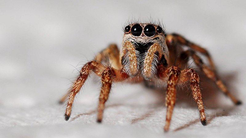 У Херсонській області туристку вкусив смертельно небезпечний павук