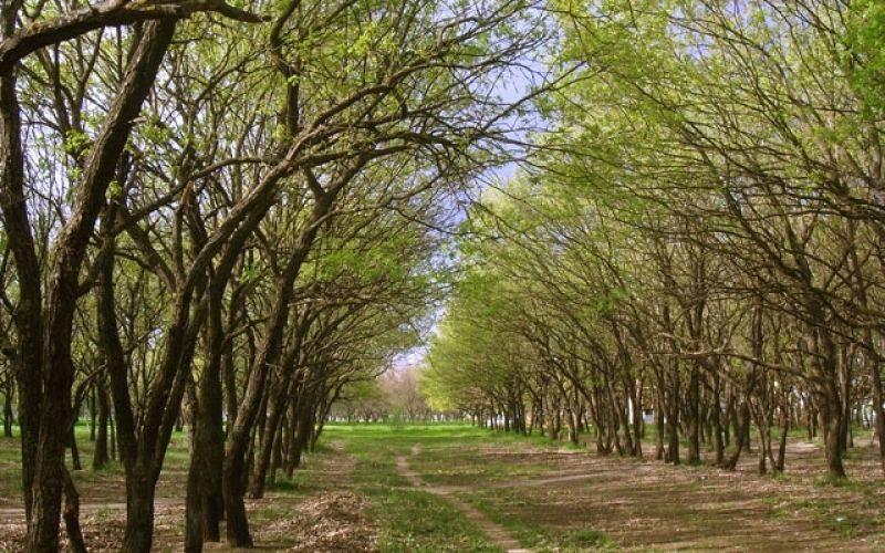 Херсонський парк «Дубки» хочуть віддати під будівництво автосалону