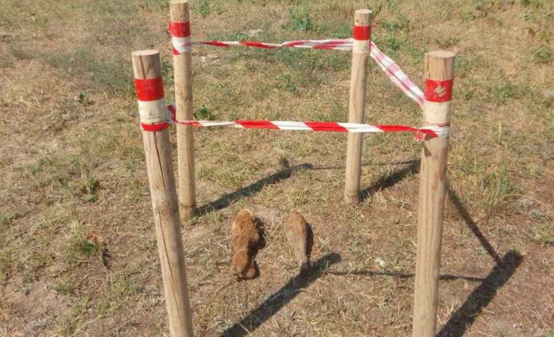 У одному з курортних селищ Херсонщини виявлено 2 мінометні міни