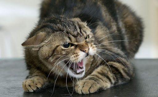 У Зеленівці виявили сказ у бродячого кота