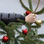 У Херсоні визначили місця утилізації новорічних ялинок