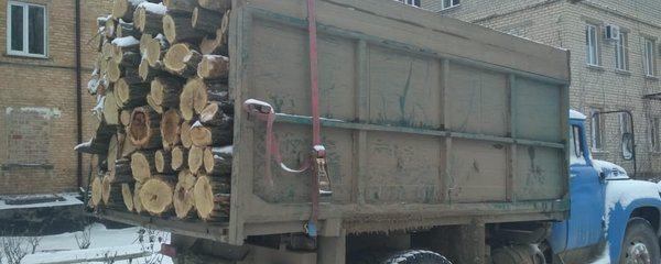 Перевозив деревину без документів: поліція Херсонщини зупинила вантажівку з 12 кубометрами акації