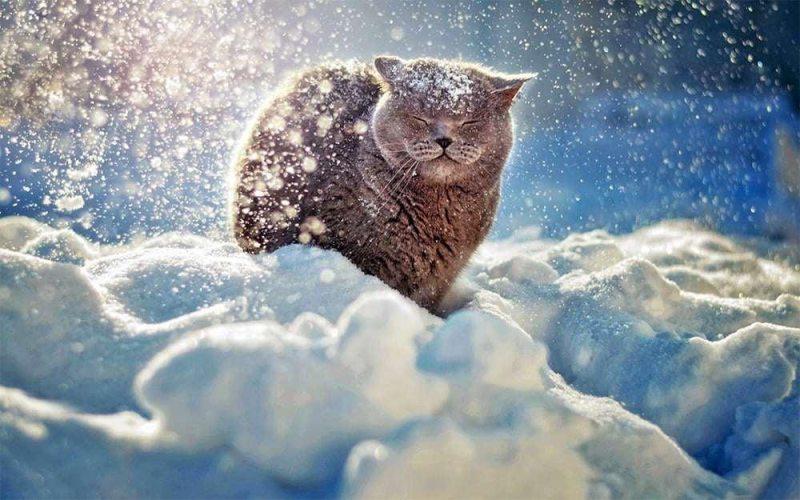 В Україні погіршиться погода: які регіони засипатиме снігом