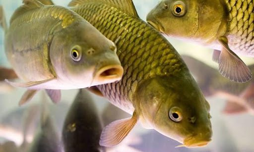 На Херсонщині браконьєри незаконно наловили риби на майже пів мільйона гривень