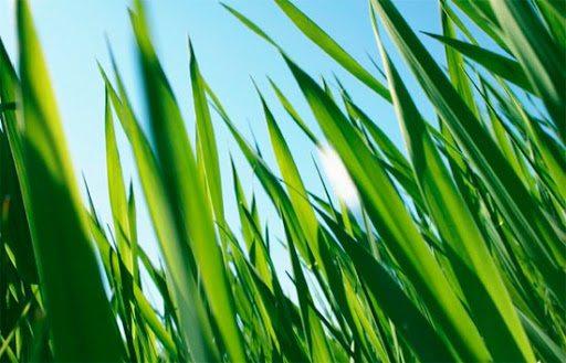 У Херсоні відбудеться великий покіс трави