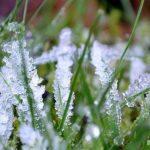 На Херсонщині очікуються заморозки